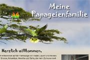 Referenz Papageienschwarm - Internet-Service Berlin - Webdesign, Homepage-Erstellung, Online-Shop-Erstellung